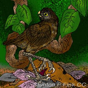 Cuban-giant-owl-stanton-fink-285_small