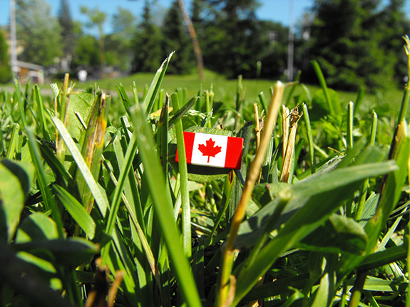 Caption: A small red and white Canadian flag pin sits in cut grass seen from extreme ground level., Credit: Morgan/Flickr
