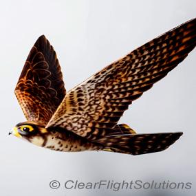 Robird-clear-flight-solutions-285_small