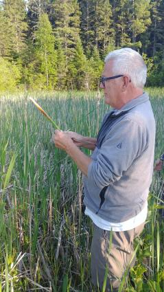 Caption: Rick Anderson, guide for the Wild Edibles Tour, explains how to harvest a cattail