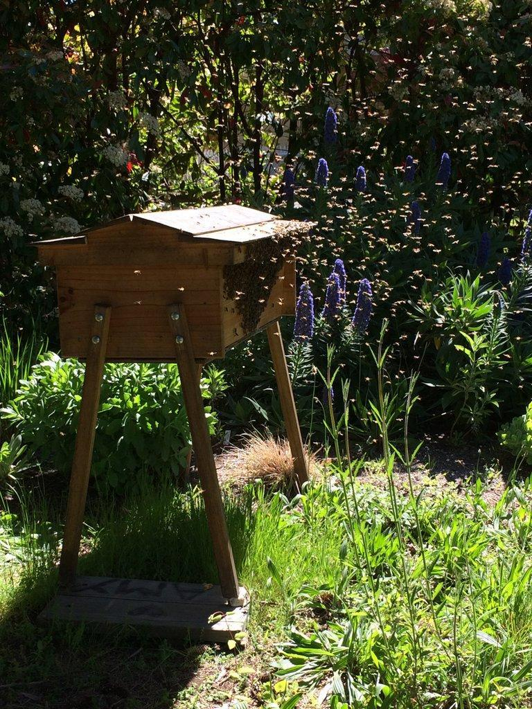 Caption: Pen's bee hives., Credit: Photo used courtesy Pen Pender