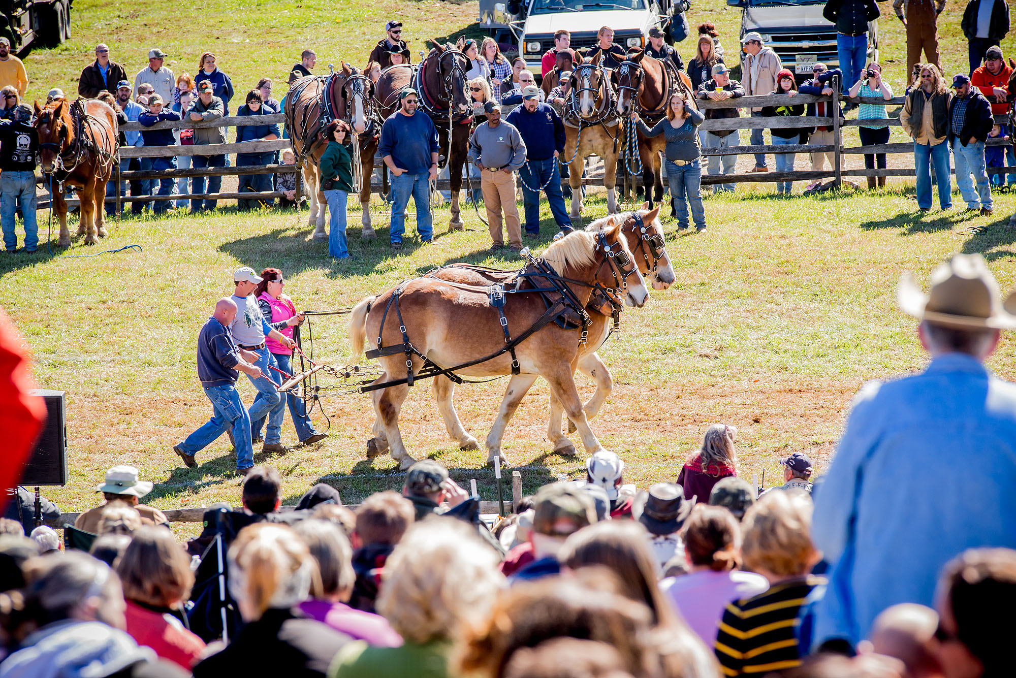 Caption: Draft horse demonstrations at the Blue Ridge Folklife Festival.  This year's festival takes place on Saturday, October 27th at Ferrum College, Ferrum, VA.  , Credit: Courtesy Blue Ridge Institute