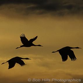 Bosque-cranes-bob-hills-wp-285_small