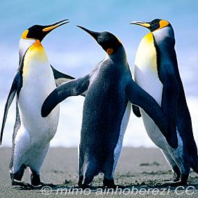 Penguins-mimo-ainhoberezi-285_small
