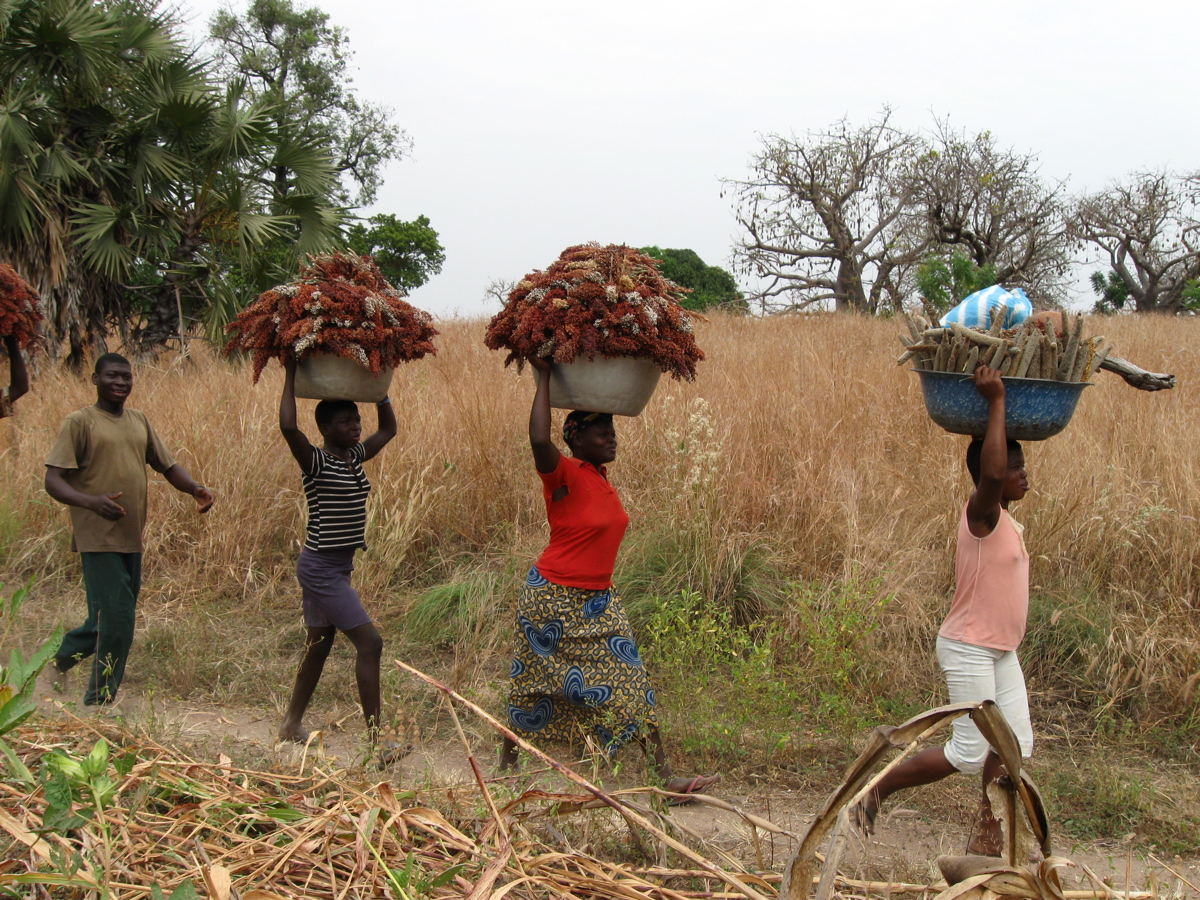 Caption: Lamba community members returning from the millet harvest, Credit: Carla Seidl