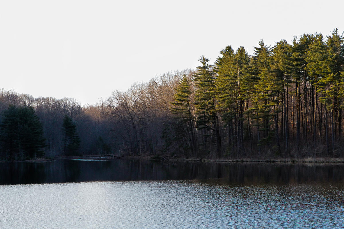 Caption: Perry State Forest in southeast Ohio could be the site of a proposed strip mine, unless residents succeed in opposing the proposal., Credit: PAIGE PFLEGER / WOSU