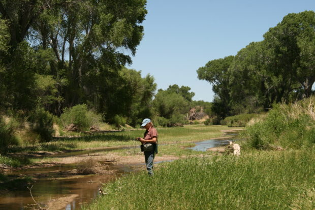 Caption: The photo is mine and that's Ms. Mesquitey along the San Pedro River. The bird song along that riparian corridor is unbelievable and we spent some time trying to identify certain calls and songs.