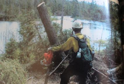 Caption: An estimated 25 million trees toppled during the 1999 Blowdown storm. Photo courtesy of Jim Cordes.