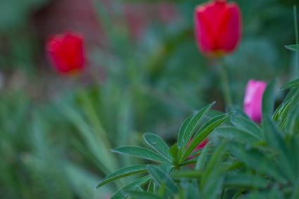 Caption: Spring Bloom, Credit: Stephan Hoglund