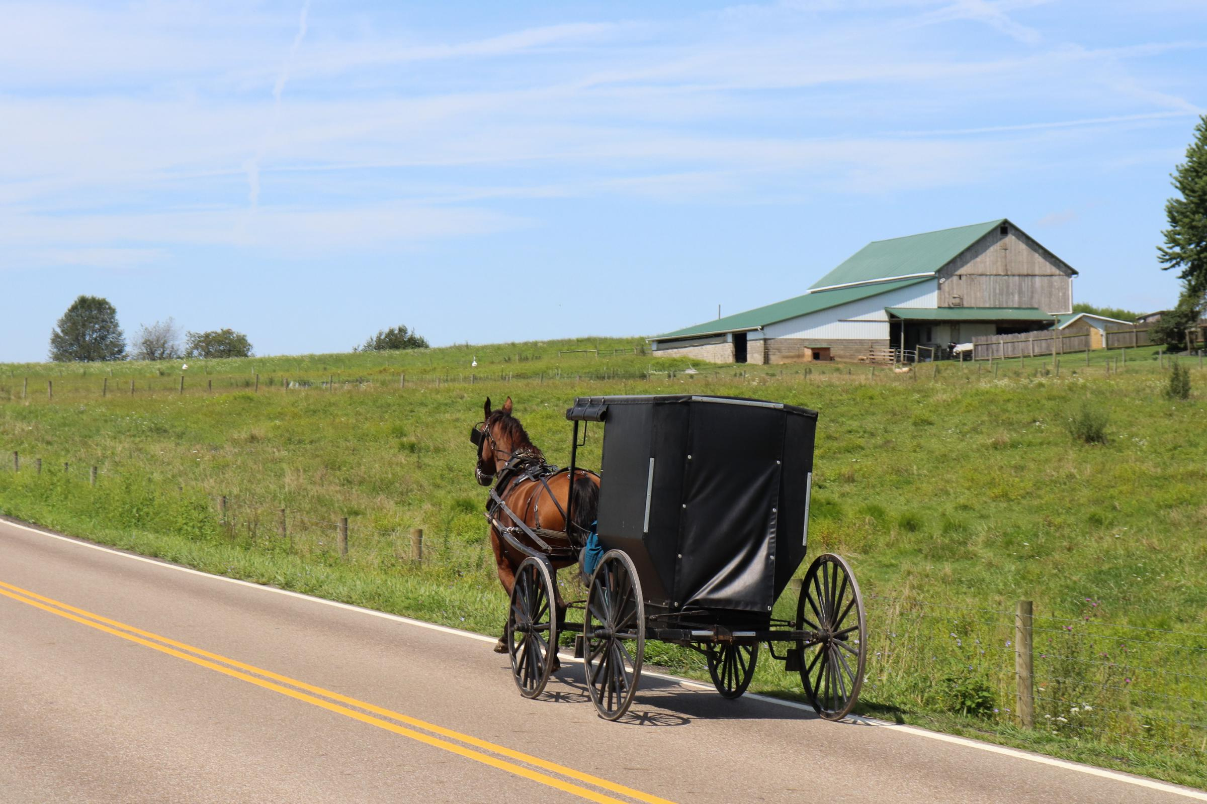 Caption: A horse and buggy drive through Holmes Co., the heart of Ohio's Amish community., Credit: PAIGE PFLEGER / SIDE EFFECTS PUBLIC MEDIA