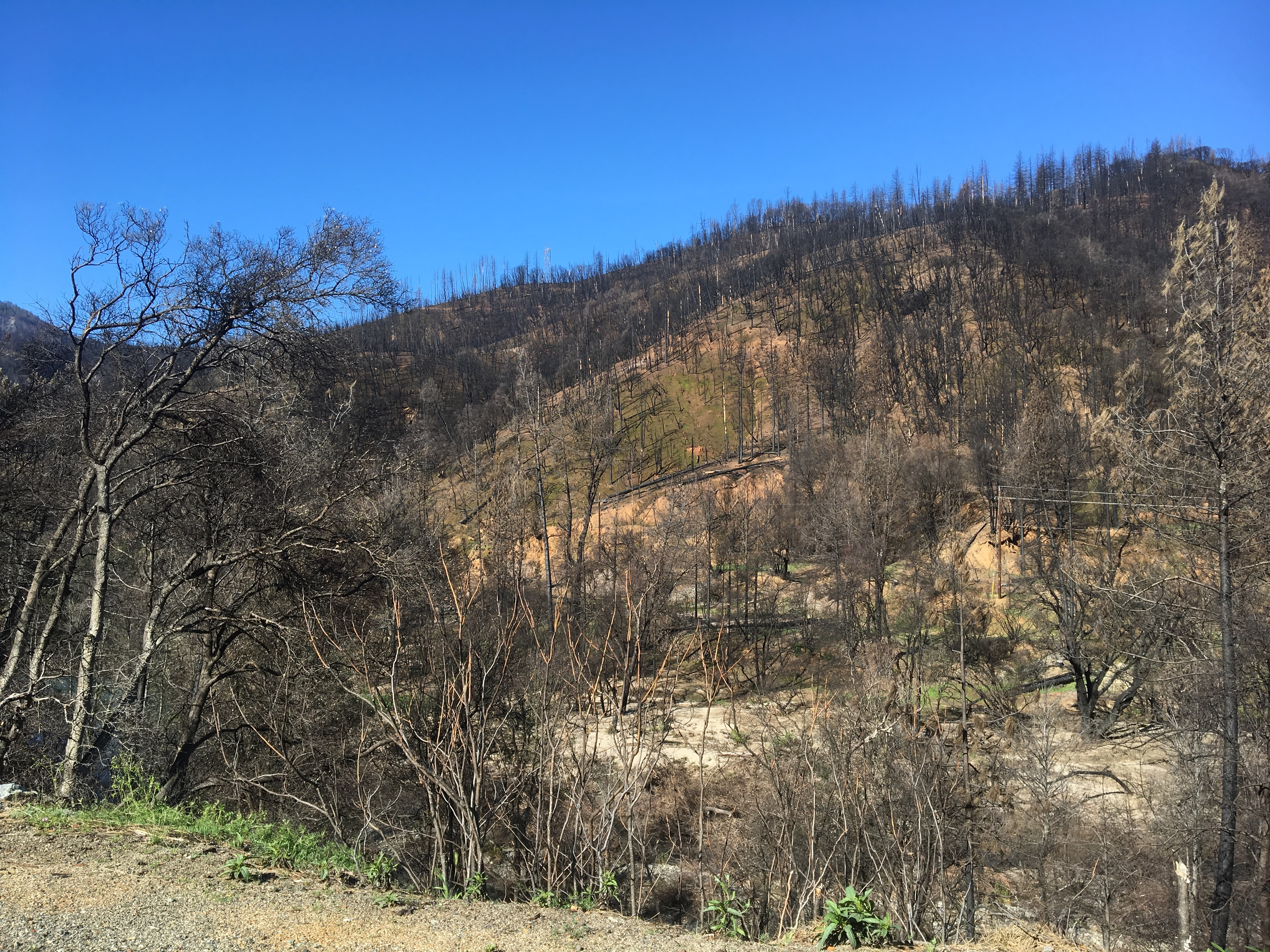 Caption: The Carr Fire burn scar