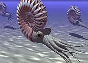 Caption: Shell on Earth, Credit: Seth Shostak