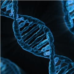 Caption: The double helix of DNA is the main carrier of the information of life, but far from the only one, according to Paul Davies and other scientists., Credit: Public Domain