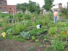 Caption: Two Coves Community Garden, Credit: Magali Regis