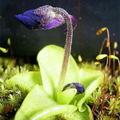 Botany_small