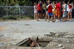 Caption: There appears to be a horse, in the sewer., Credit: Image by The Internet.