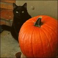 Halloweenkitty_small