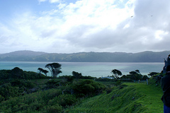 Wellington Harbour from Matiu Island Credit: Lauren Panton