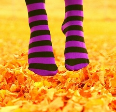 Fall_socks_d_sharon_pruitt_medium