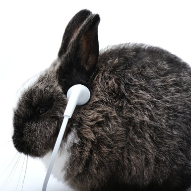 "Credit: <a href=""http://www.shutterstock.com/pic-130335818/stock-photo-young-rabbit-listening-to-music-on-headphones.html"">Shutterstock</a>"