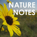 Nature-notes_small