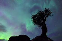 Caption: Aurora Storm, Credit: Travis Novitsky