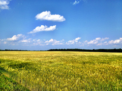 Caption: The Fields of Northern Prairie Culture