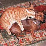 Cat doing dog