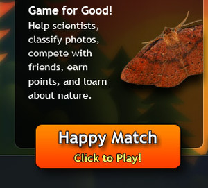 Happy Match