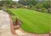 Green_lawn_165192844_std