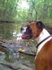 Fsps-pet-photos-sept-oct-2009-016