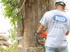 Jc_tree_job_059