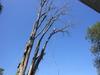 Jc_tree_job_043