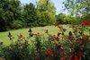 Cotillion_garden_076
