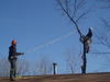 Tree_work_07_230