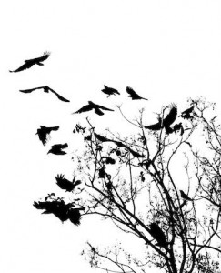 image of crows in a tree
