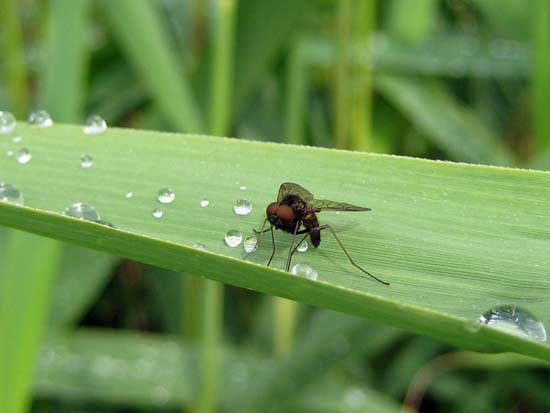 image of a fly drinking water