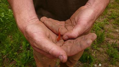 A-newt
