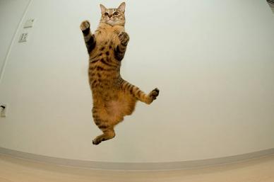 Airborne-cat