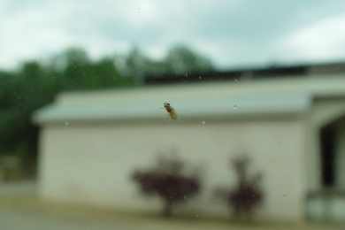 Bug-on-glass