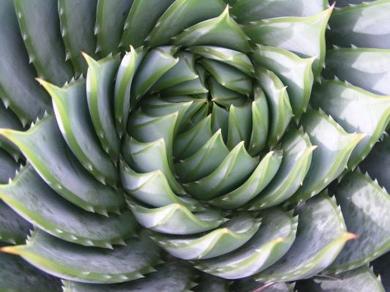 Cactus-spiral