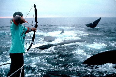 Darting-whales-sable-island