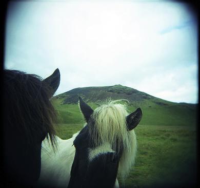 Icelandic-holga-horses