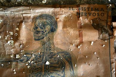 Il-sistema-nervoso