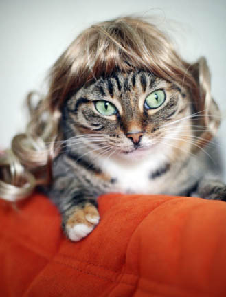 Kitty-wigs
