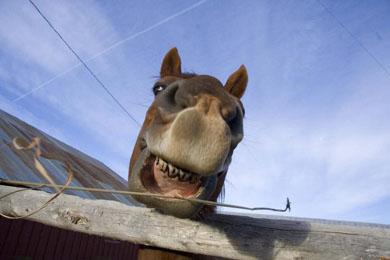 Montana-horse