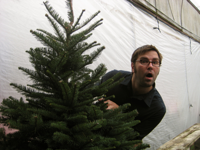 Picking-out-a-christmas-tree