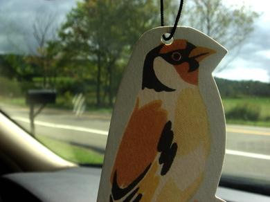 Pinebird