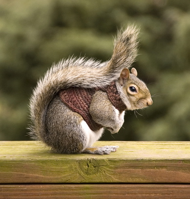 Squirrel-in-sweater