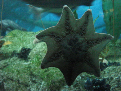 Starfish-on-glass